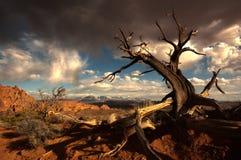 Árbol muerto debajo de las nubes Fotos de archivo