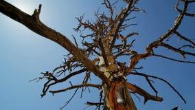 Árbol muerto del desierto en sol caliente almacen de metraje de vídeo