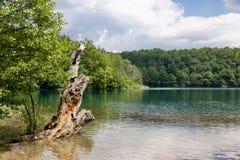 Árbol muerto dentro del lago del plitvice del lago en Croacia Imagen de archivo