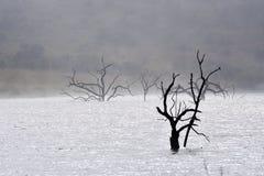 Árbol muerto en agua Imágenes de archivo libres de regalías
