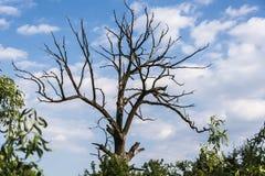 Árbol muerto en bosque Imagen de archivo