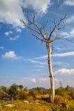 Árbol muerto en campo Foto de archivo libre de regalías