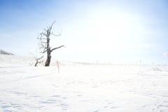 Árbol muerto en campo nevado Imagen de archivo libre de regalías