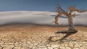 Árbol muerto en desierto