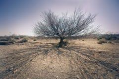 Árbol muerto en desierto Foto de archivo libre de regalías