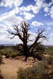 Árbol muerto en desierto Fotos de archivo libres de regalías