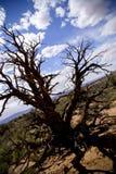 Árbol muerto en desierto Fotos de archivo