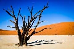 Árbol muerto en desierto foto de archivo