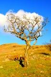 Árbol muerto en districto del lago Fotografía de archivo libre de regalías