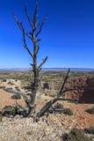 Árbol muerto en el alto desierto Fotografía de archivo