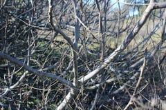 Árbol muerto en el bosque Fotos de archivo