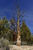 Árbol muerto en el bosque Imagen de archivo