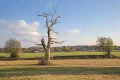 Árbol muerto en el campo de Essex en otoño Foto de archivo