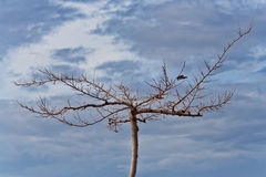 Árbol muerto en el cielo dramático Fotos de archivo