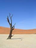 Árbol muerto en el desierto Imagen de archivo