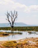 Árbol muerto en el lago Nakuru, Kenia imagen de archivo libre de regalías