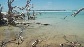 Árbol muerto en el mar, con la agua de mar de la turquesa en Australia almacen de metraje de vídeo
