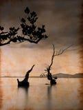 Árbol muerto en el mar en el papel Fotografía de archivo