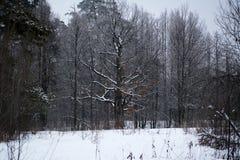 Árbol muerto en el medio del bosque Imagen de archivo libre de regalías