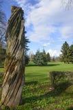 Árbol muerto en el parque de Monza Imagen de archivo libre de regalías
