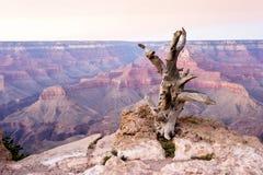 Árbol muerto en el parque nacional de Grand Canyon, Arizona, los E.E.U.U. Imagen de archivo
