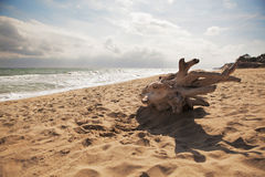 Árbol muerto en la playa fotos de archivo libres de regalías