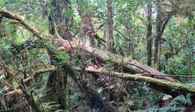 Árbol muerto en la selva Fotografía de archivo