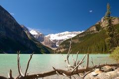 Árbol muerto en Lake Louise Imágenes de archivo libres de regalías