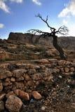 Árbol muerto en Maaloula Imágenes de archivo libres de regalías