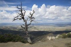 Árbol muerto en Mesa Verde Fotografía de archivo libre de regalías