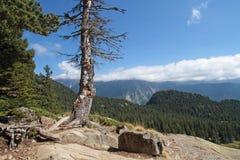 Árbol muerto en montañas Imagenes de archivo