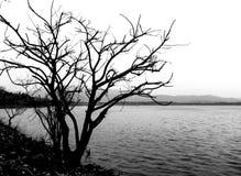 Árbol muerto en parque Fotografía de archivo libre de regalías