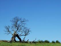 Árbol muerto en prado Foto de archivo libre de regalías