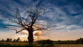 Árbol muerto en puesta del sol Imagen de archivo