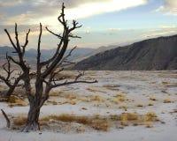 Árbol muerto en terraza en la salida del sol Foto de archivo