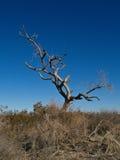 Árbol muerto en un desierto Fotografía de archivo