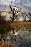 Árbol muerto en un pantano Fotos de archivo libres de regalías