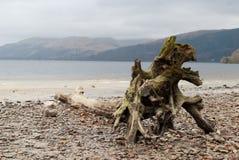 Árbol muerto en una orilla Imagen de archivo libre de regalías