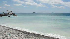 Árbol muerto en una playa dejada en desorden almacen de metraje de vídeo