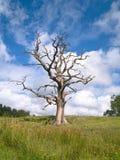 Árbol muerto fantasmagórico solo en un campo de hierba verde Fotos de archivo libres de regalías