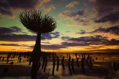 Árbol muerto por el pantano Foto de archivo