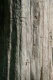 Árbol muerto - primer Fotografía de archivo