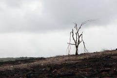 Árbol muerto quemado Foto de archivo