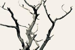Árbol muerto sin fondo fotografía de archivo libre de regalías