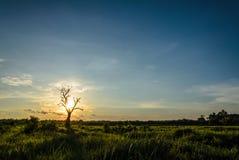 Árbol muerto sobre fondo del cielo en puesta del sol Imágenes de archivo libres de regalías