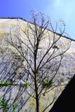 Árbol muerto solamente Fotografía de archivo libre de regalías