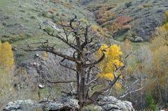 Árbol muerto solitario Imágenes de archivo libres de regalías
