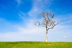 Árbol muerto solitario en prado Foto de archivo