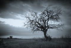 Árbol muerto solo Imagen de archivo