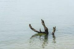 Árbol muerto solo en el río fotografía de archivo libre de regalías